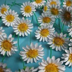 手工菊花制作方法过程 卡纸菊花的做法图解