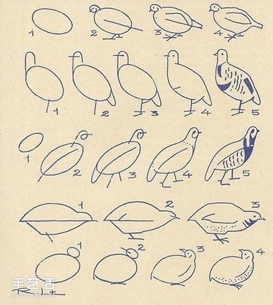 不同形態動物的簡筆畫畫法圖片 簡單容易學!
