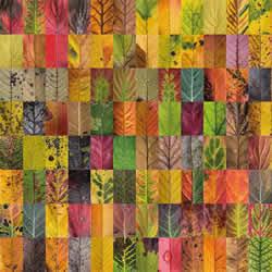 用摄影保存叶子的美 宛如美丽拼布的叶子