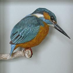 精细入微的纸鸟模型 大师级鸟类纸模型图片
