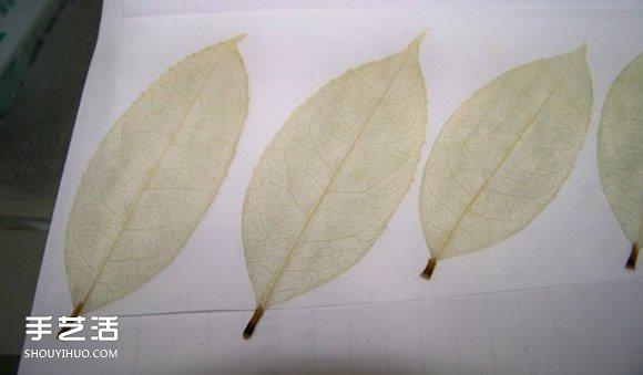 叶脉书签最简单的做法 自制叶脉书签的制作方法 -  www.shouyihuo.com