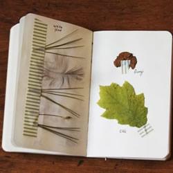 充满森林气息的手工植物标本DIY图片欣赏