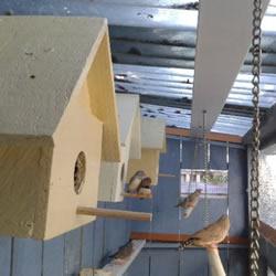 鸡舍改造成鸟舍的方法 自制大空间鸟舍DIY教程