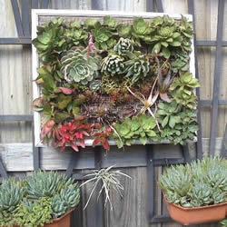 镜框改造多肉植物花盆 创意多肉花盆DIY方法