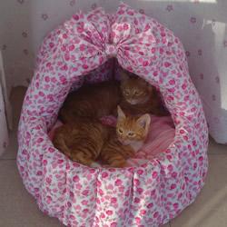 如何自制猫窝图解教程 手工布艺猫窝制作方法