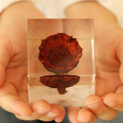 吉村紘一的树脂标本方块 将大自然封于小宇宙