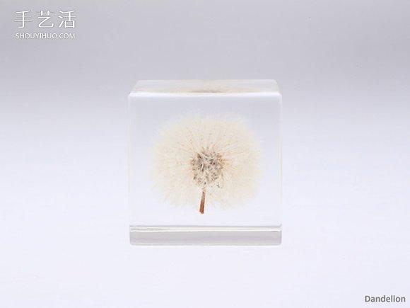 吉村紘一的树脂标本方块 将大自然封于小宇宙 -  www.shouyihuo.com