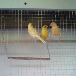 旧书架改造鸟柜的方法 旧家具DIY制作超大鸟笼