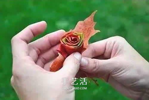 落叶制作玫瑰花图解 枫叶玫瑰花的做法步骤