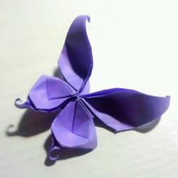 凤尾蝶折纸图解教程 LadBrokes官网凤尾蝶的折法步骤