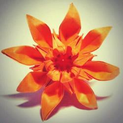 八瓣菊花的折法图解 重阳节立体菊花折纸教程