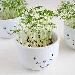 自制卡通盆栽的方法 简单可爱又有爱!