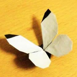 折纸蝴蝶的详细步骤图 手工菜粉蝶的折法图解