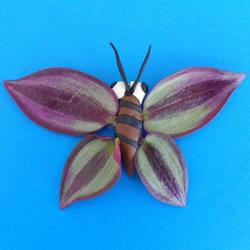 用树叶做翅膀 简单省力的粘土蝴蝶LadBrokes中文网