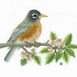 传统花鸟刺绣的绣法图解 漂亮小鸟绣法步骤图
