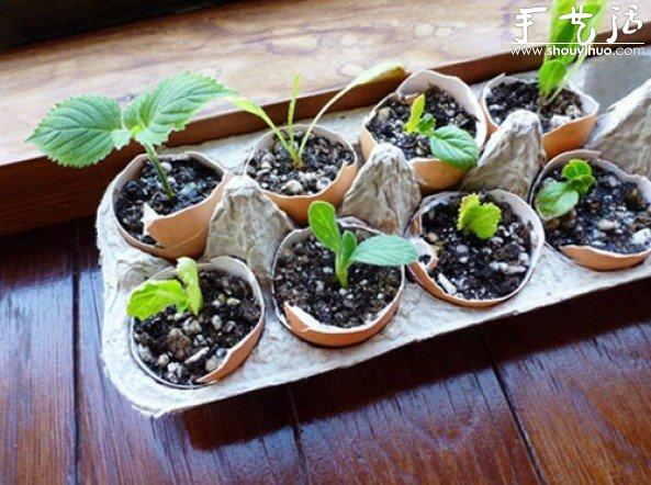 蛋殼DIY小盆栽的培養皿