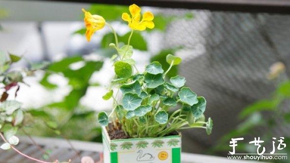 如何移栽花草 花草移植的方法
