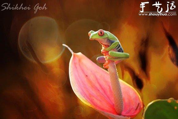 創意攝影,拍出有趣的青蛙