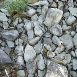性感妖娆的石头美人