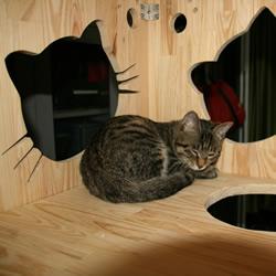 <font color='#FF6633'>纯木手工DIY的猫窝和猫爬架</font>
