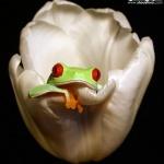 创意摄影,拍出有趣的青蛙