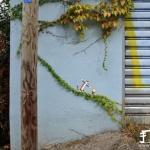 现实与创意涂鸦DIY的街头艺术