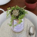 多肉植物移植到铁罐里,DIY清新盆栽的教