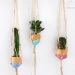 蛋壳废物利用DIY迷你盆栽的教程