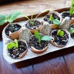蛋壳DIY小盆栽的培养皿