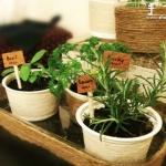 利用回收的塑料容器DIY清新小盆栽