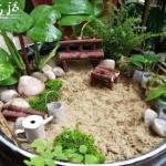 迷你微型花园制作教程