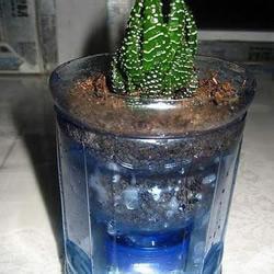 塑料瓶废物利用改造成花盆的教程
