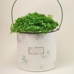 废弃奶粉罐手工制作盆栽的方法