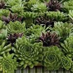 多肉植物DIY装饰摆设