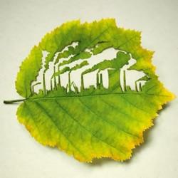 树叶上的精巧雕刻