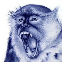 圆珠笔绘制的动物肖像