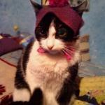 简单有趣的宠物帽子DIY