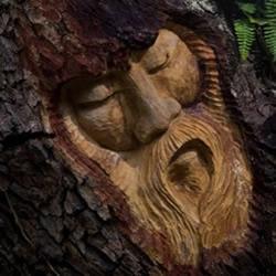 树木雕刻 雕塑艺术与自然的融合