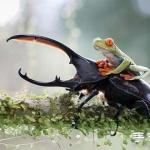 2014年Sony World摄影大赛之趣味狂野动物世界