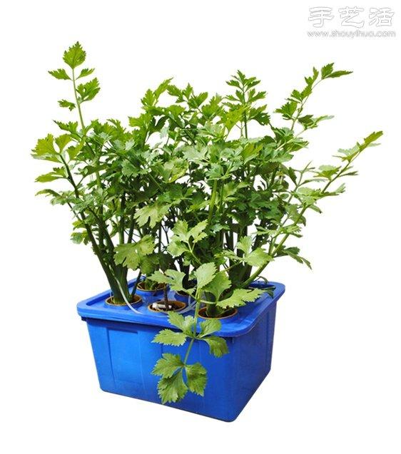 超詳細水培種菜教程 家裡也可以方便種菜啦!