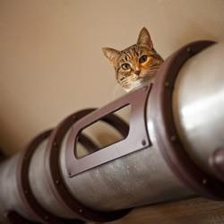 金属管DIY猫爬架 实在太贴心啦!