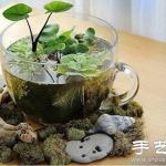 瓶瓶罐罐废物利用DIY迷你盆栽