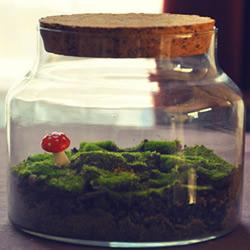 玻璃罐和苔藓植物DIY的可爱装饰摆件