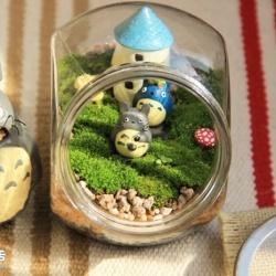 DIY可爱的苔藓造景 自制漂亮苔藓微景观