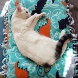 无需针线活的猫咪垫子手工制作图解教程
