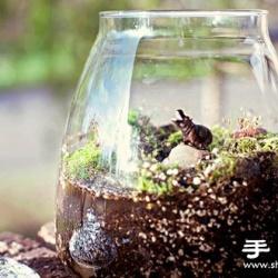 手工制作精致的玻璃瓶盆景图解教程