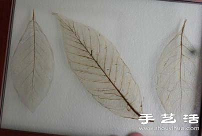 樹葉標本怎麼做 樹葉標本製作方法