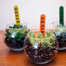 废品利用:12个废物利用小技巧DIY创意盆栽