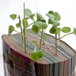 废旧书籍作花盆 废物利用种植萝卜苗