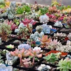 家里种什么植物好 常见室内植物的功效